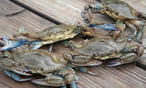 Crabbing Island White Long Beach Harbor